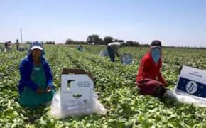 En alerta SSA por brotes de COVID-19 en campos agrícolas de Mulegé
